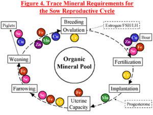 Mineralen zeugen