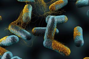 Clostridium perfringens